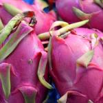 Масштабы выращивания экзотической питайи в Турции увеличатся