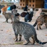 Бездомные животные получают помощь от муниципалитета