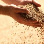 Турецкий экспорт зернобобовых за 3 года приблизился к $1 млрд