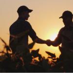 Муниципалитет Алании скупая овощи, защитит фермеров от разорения