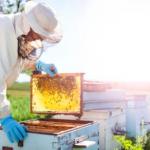 В Аланье поддержали пчеловодов